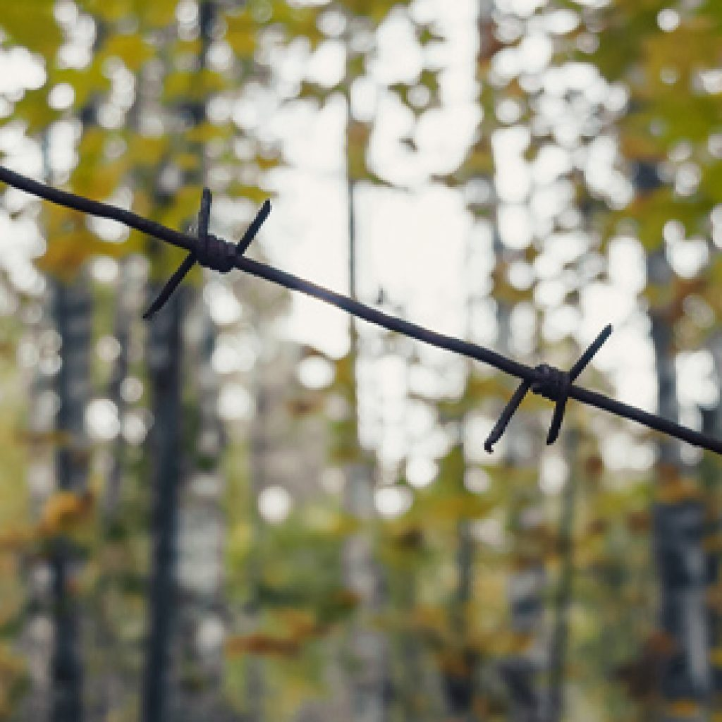 wooded trees with barbed wire
